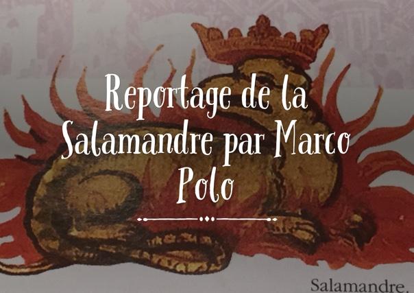 Reportage de la Salamandre par Marco Polo